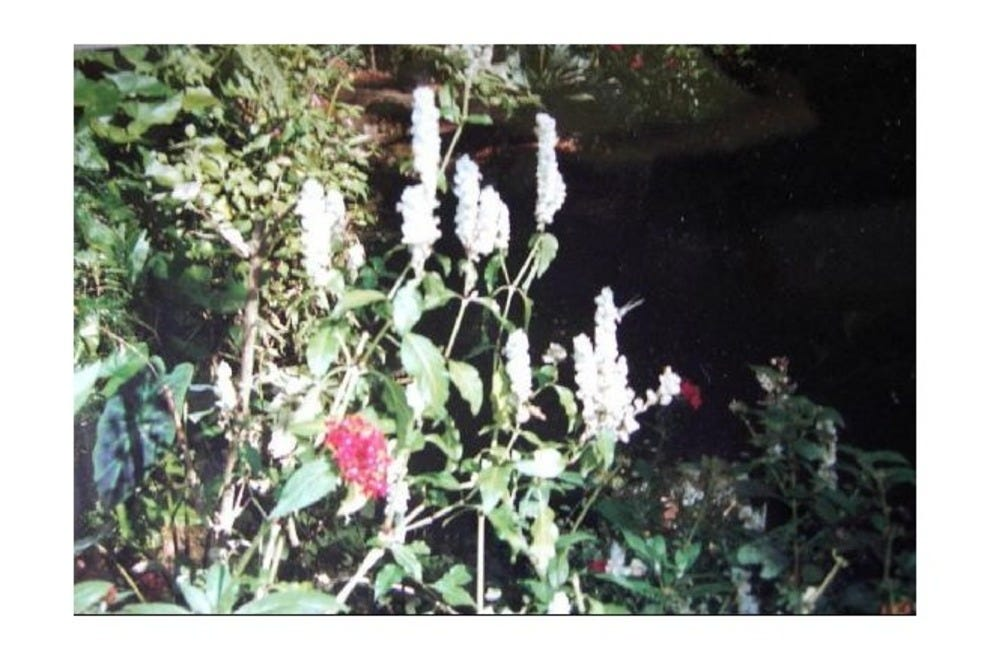Spirogyra Butterfly Garden Costa Rica Attractions Review