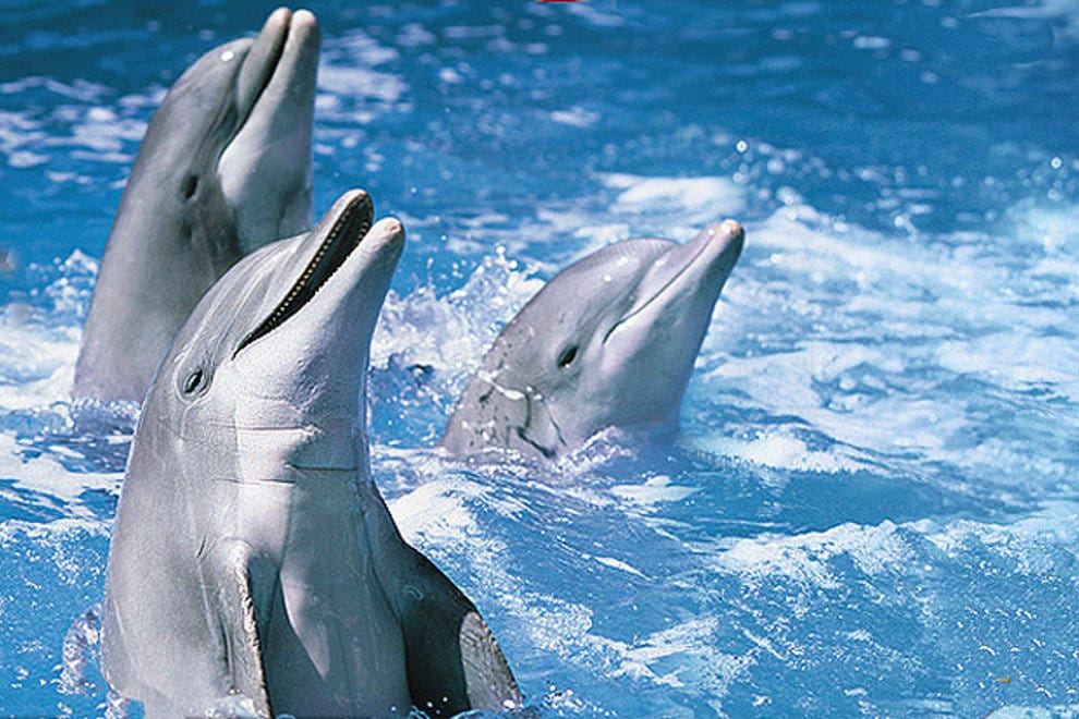 Performing dolphins at Marineland
