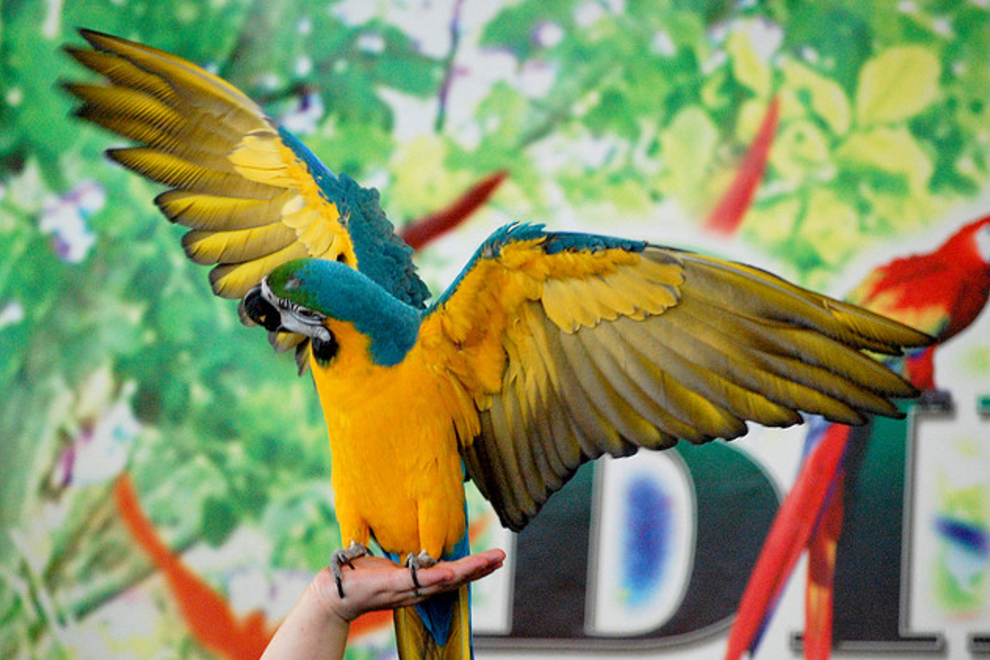 Parrot At The Kingdom