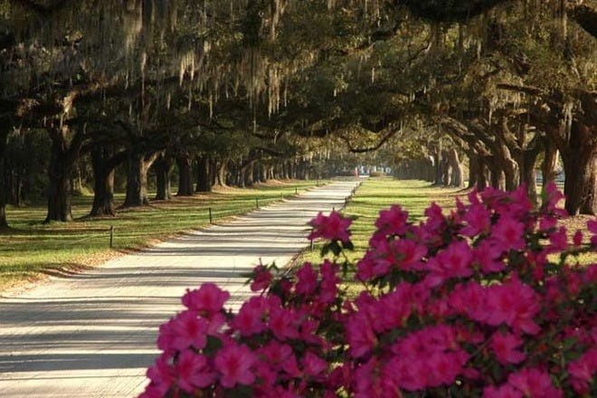 Plantations in Charleston
