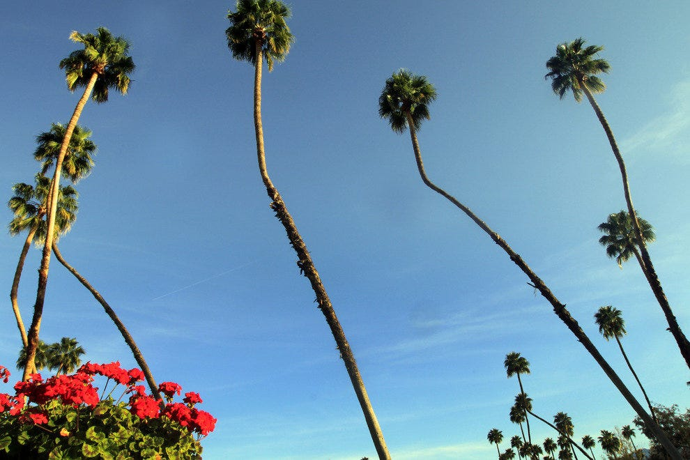Rancho Las Palmas Resort & Spa, view on tall palms
