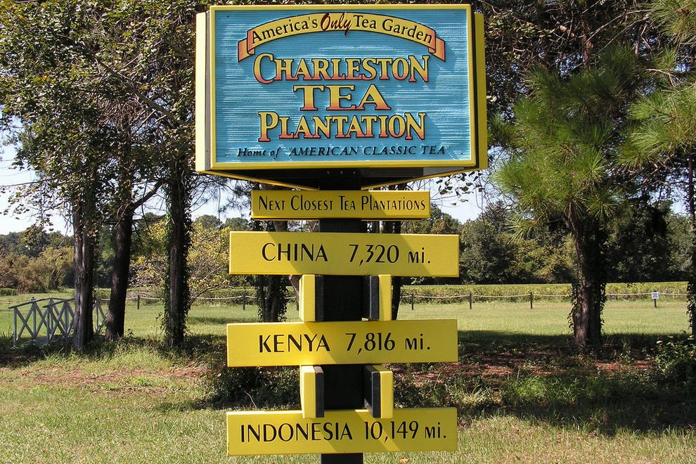 Charleston Tea Plantation Charleston Attractions Review