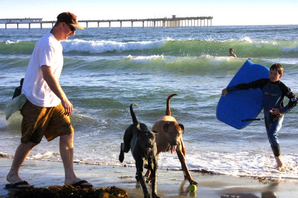 It's A Dog's World on Select San Diego Beaches