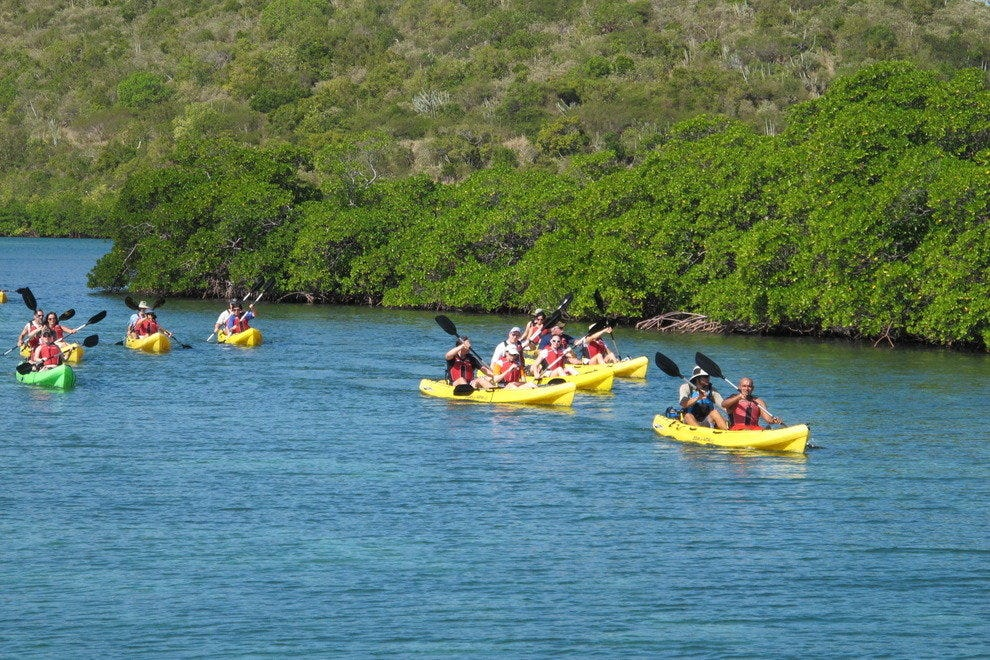 Kayakers on the mangrove lagoon, St. Thomas