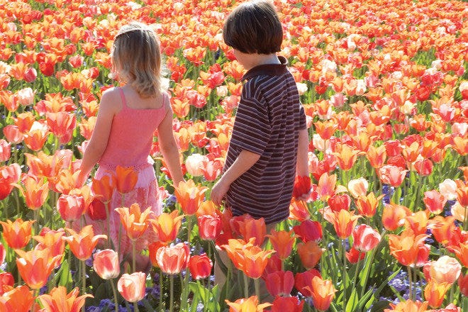 Brother and sister walking in tulips