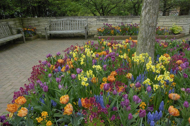 The Sensory Garden celebrates the fragrances, sounds, colors, textures, and movement of plants.