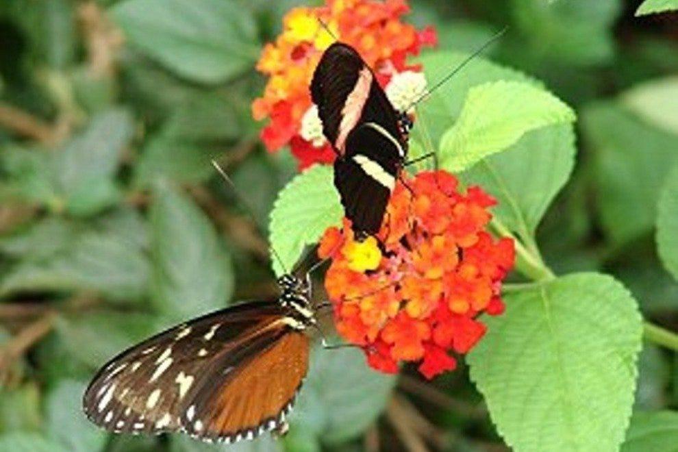 约克野生王国的蝴蝶王国