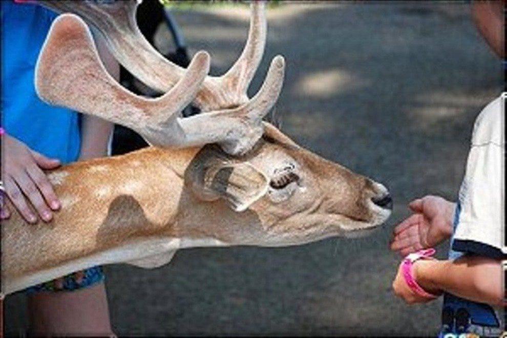 约克野生王国宠物动物园的居民。