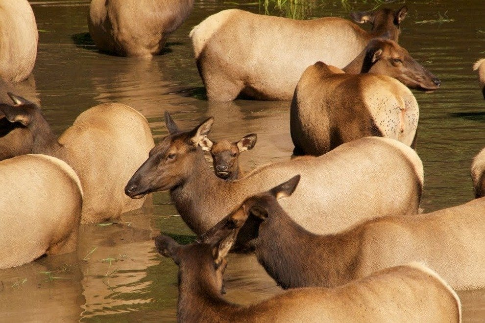 A heard congregates to drink at Northwest Trek Wildlife Park.