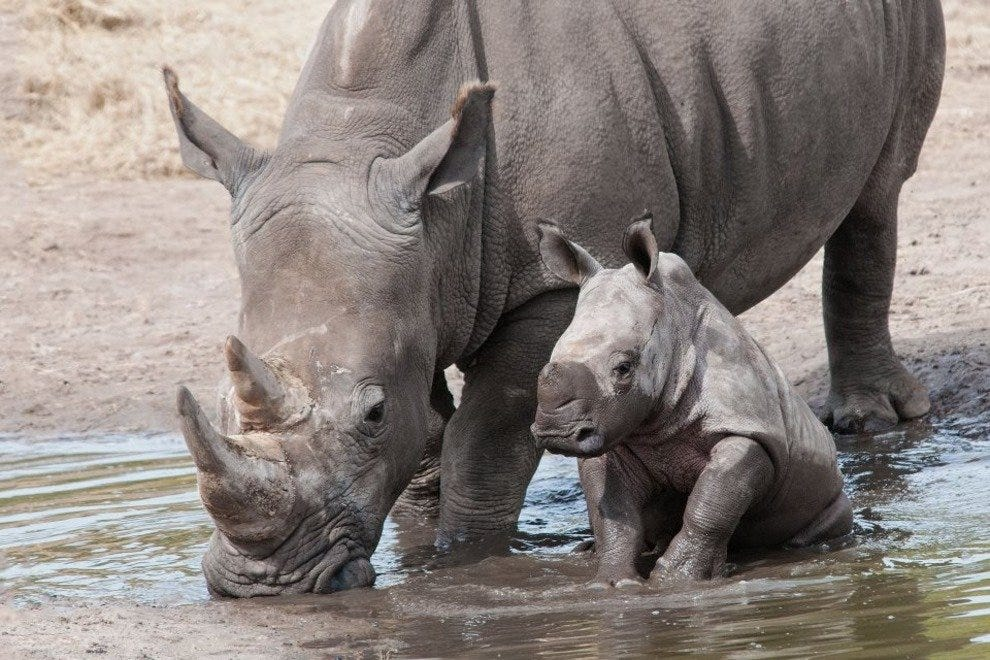 Rhinos are just one of the species you will encounter at Lowry Park Zoo