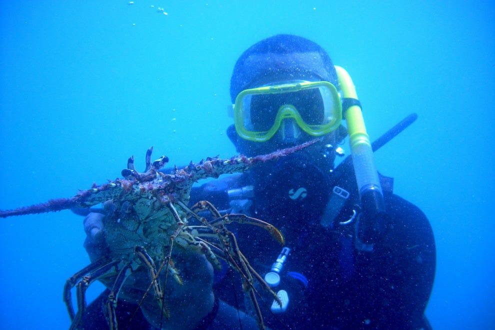Key West Scuba Diving and Snorkeling: 10Best Florida Scuba ...