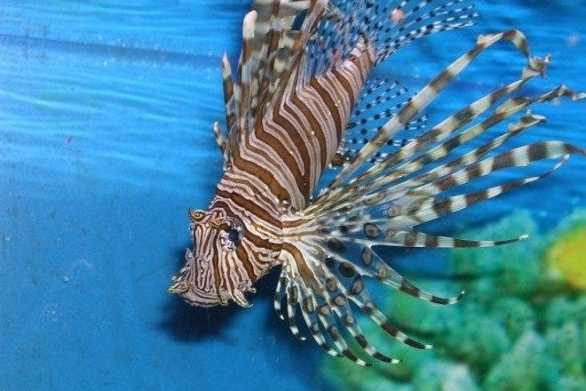 The Living Planet Aquarium - Best Attractions in Salt Lake ...