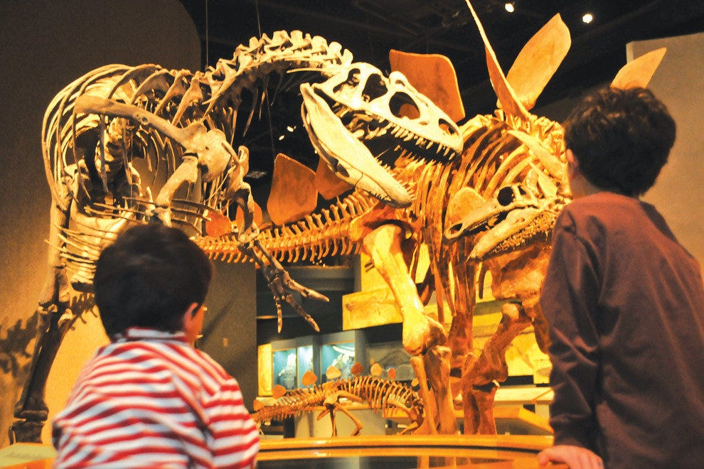 Children gaze at dinosaur bones at the Denver Museum of Nature and Science.
