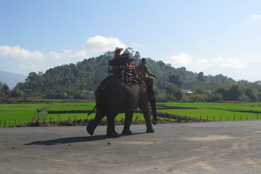 Elephant trekking through the central highlands of Vietnam