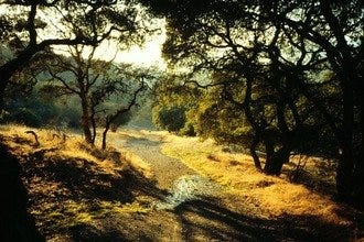 Napa Valley Sightseeing Best Sights Reviews - 11 amazing attractions and activities in napa valley