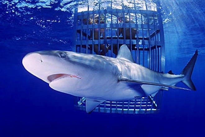 Island View Hawaii Shark Tour