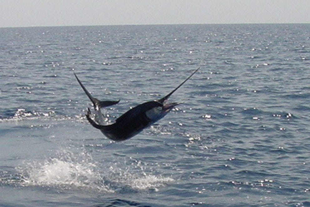 Taco's HOOKED UP Sportfishing Charters