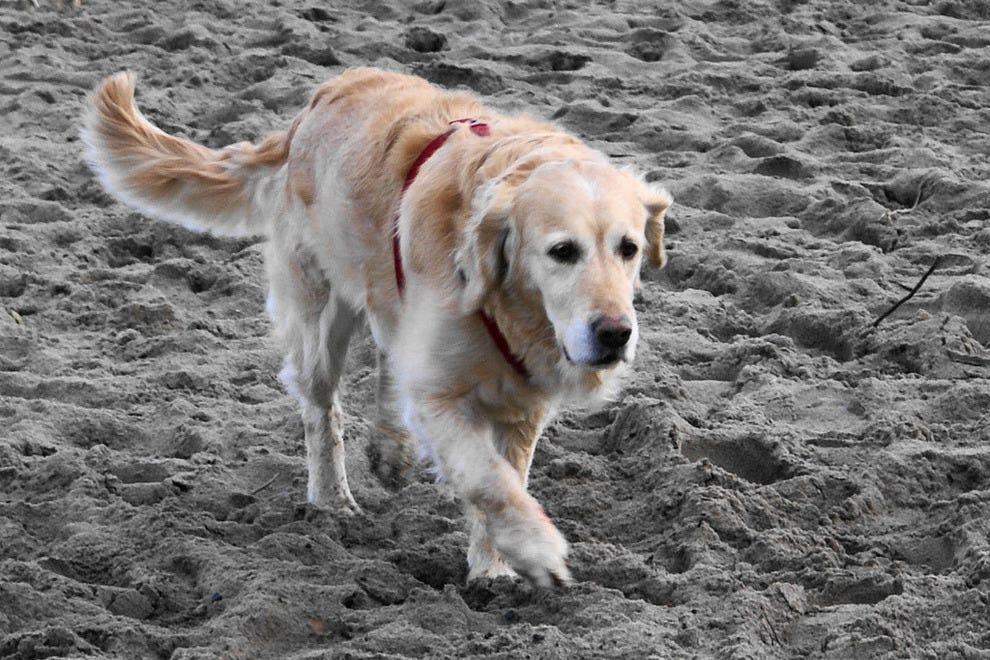 Myrtle Beach: Pet Friendly Hotels in Myrtle Beach, SC: Pet