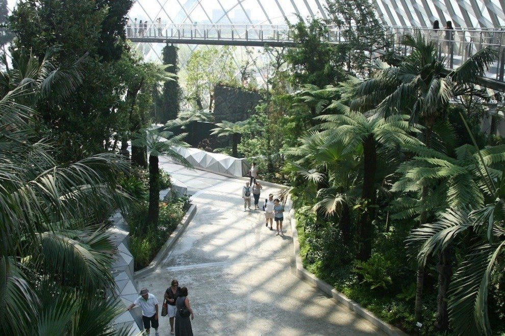 The Cloud Forest takes visitors on a journey through lush vegetation