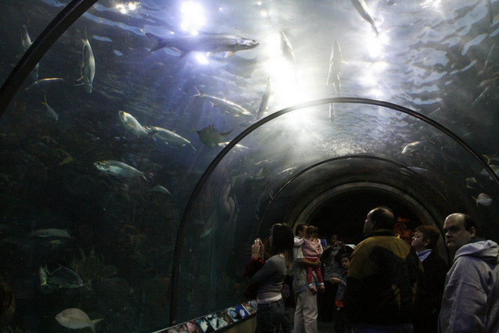 Audubon Aquarium Tunnel