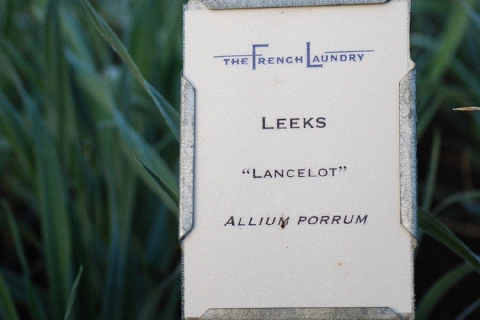 Leeks growing in the French Laundry garden