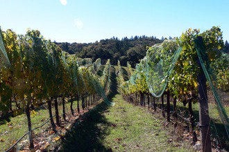 Sonoma's Most Romantic Spot for Harvest