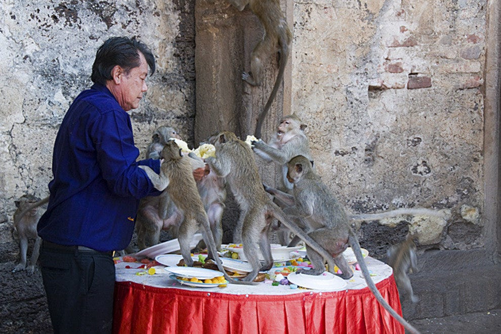 Feeding the monkeys, Lopburi