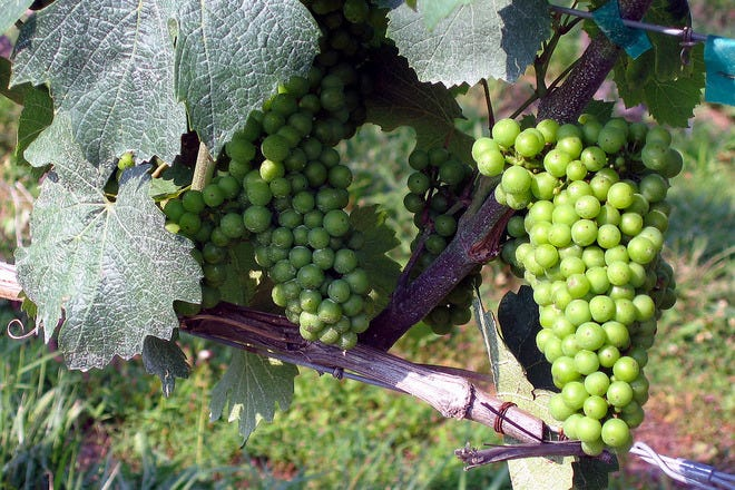 Wine Tasting Tours in Rome