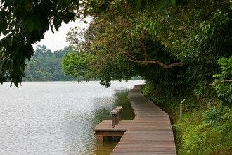 10Best Day Trip: Explore Macritchie Resevoir Park