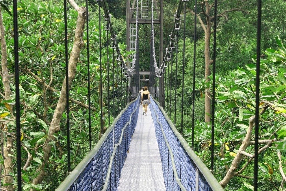 The HSBC TreeTop Walk gives you a bird's eye view of the rainforest canopy