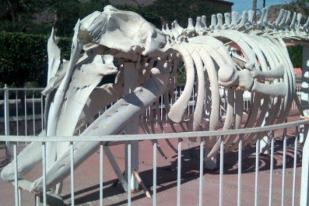 It's hard to miss the natural history museum; just look for the whale skeleton out front