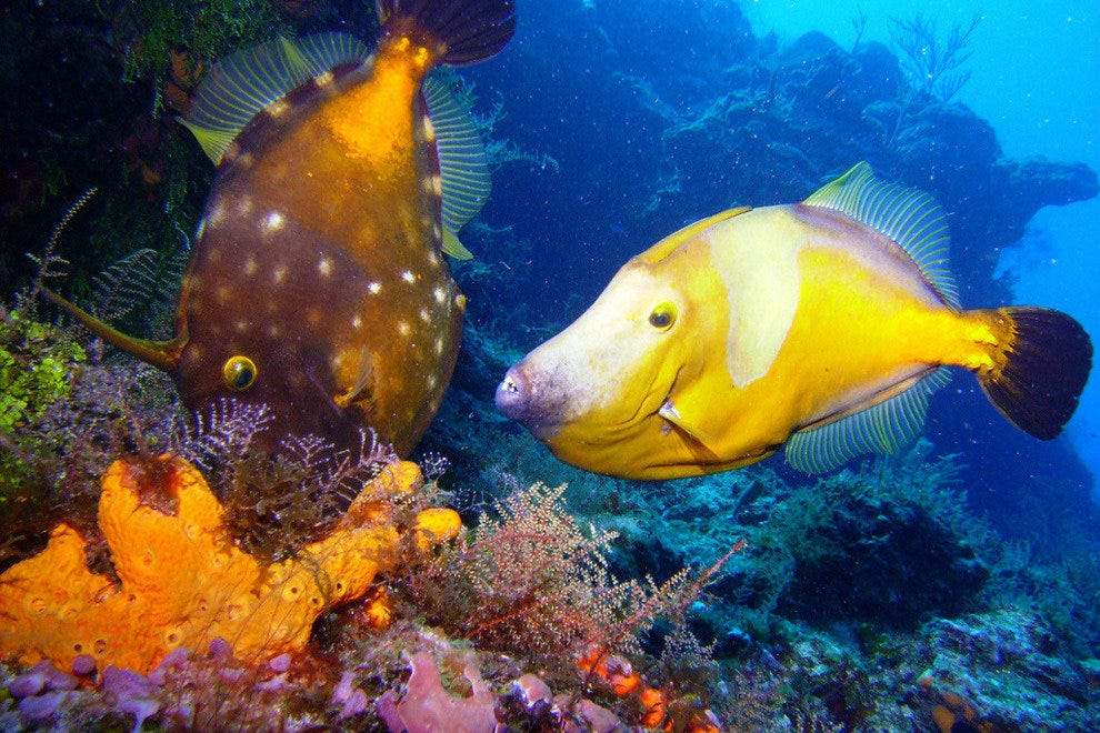 Cozumel is one of the world's best places for scuba diving