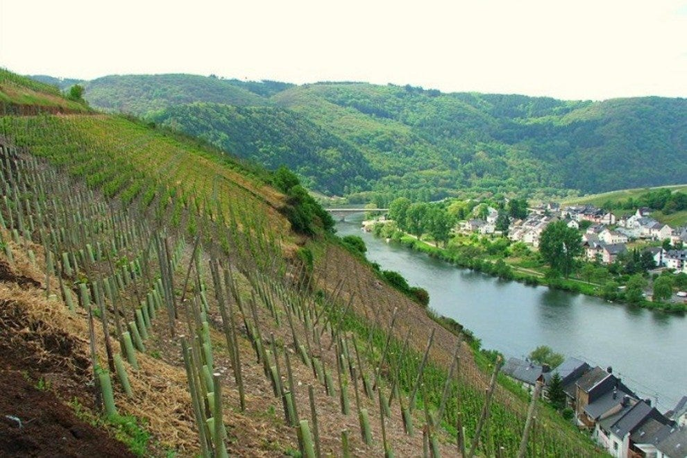 The scenic Mosel river valley is home to the world's best Riesling vineyards.