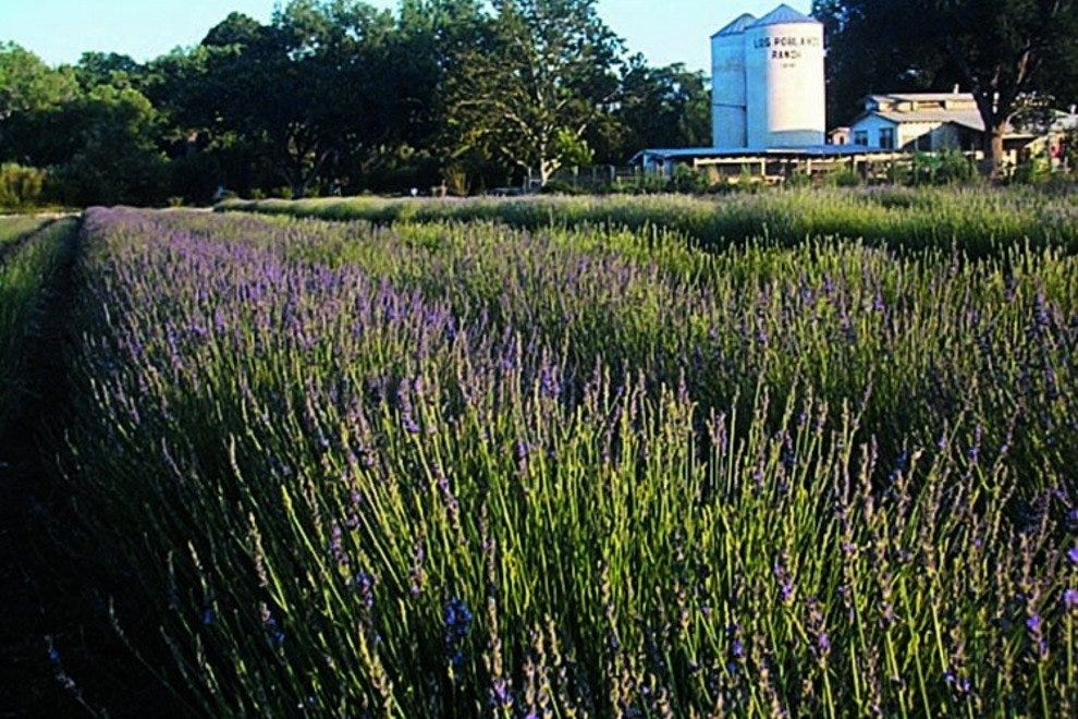 Lavender fields at Los Poblanos Ranch