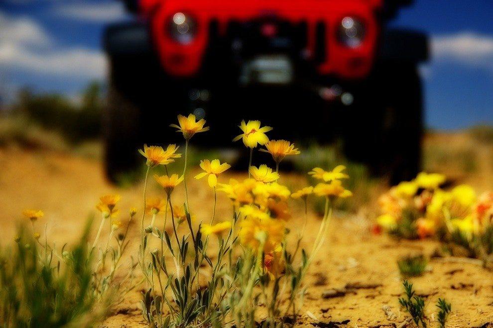 新墨西哥红色吉普车之旅
