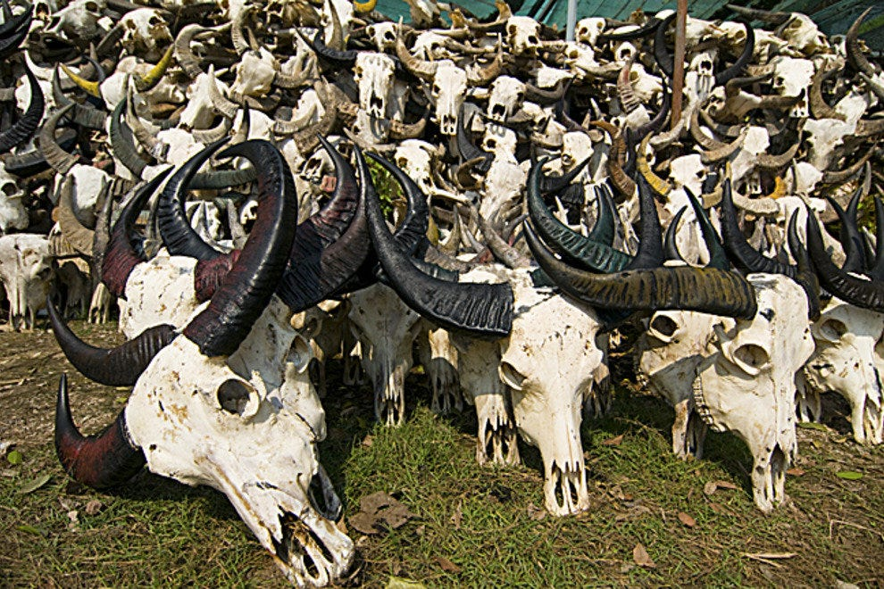 buffalo skulls at Wat Hua Krabeu