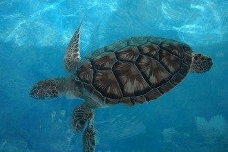 Tortugranja: The Little Turtle Farm on Isla Mujeres