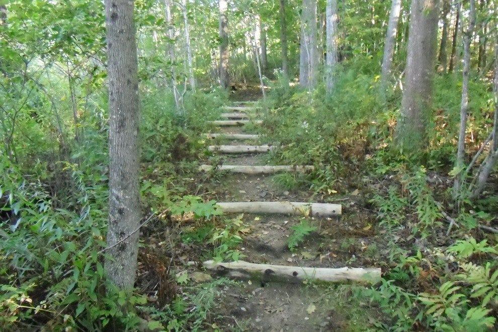 几条小路通向茂盛的山地森林。