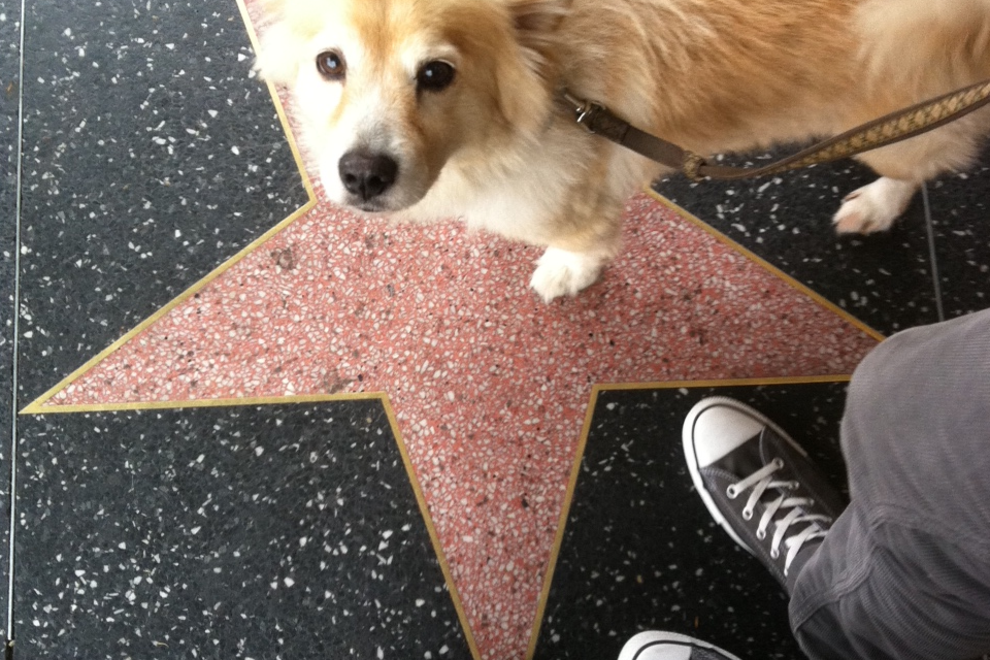 Yogi on the walk of fame
