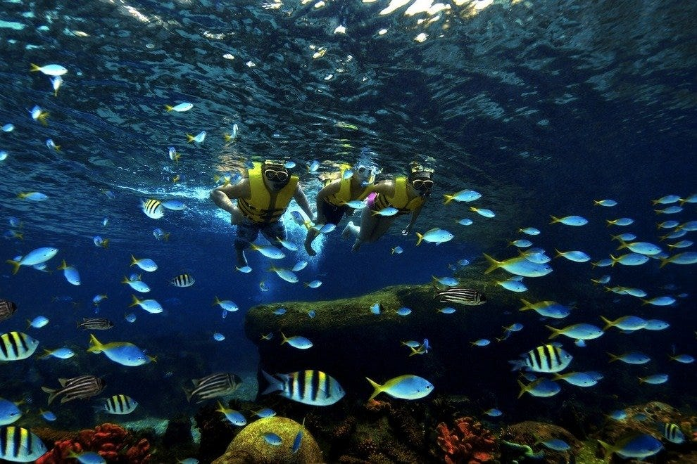 Snorkel amongst over 20,000 fish at Rainbow Reef