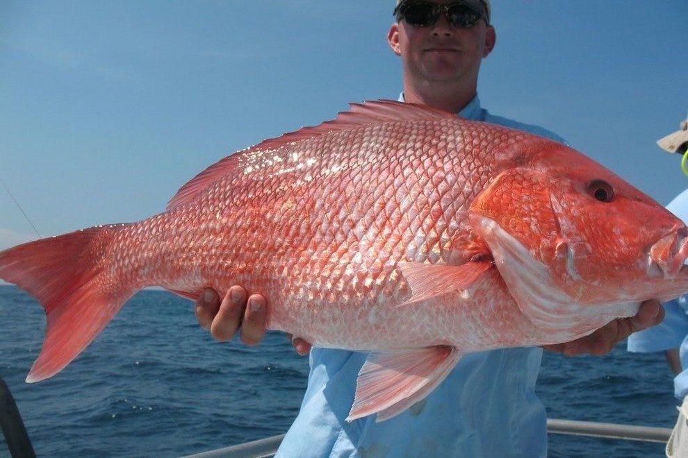 Savannah fishing charters 10best attractions reviews for Flying fish savannah ga