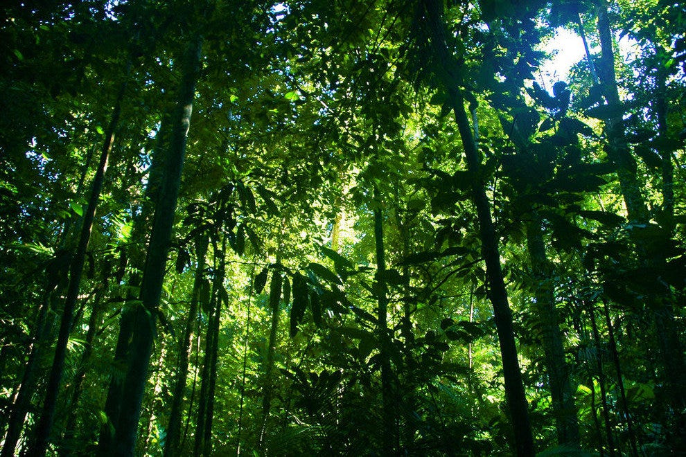 The Daintree Rainforest