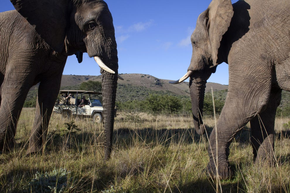 Addo Elephant Park in Eastern Cape