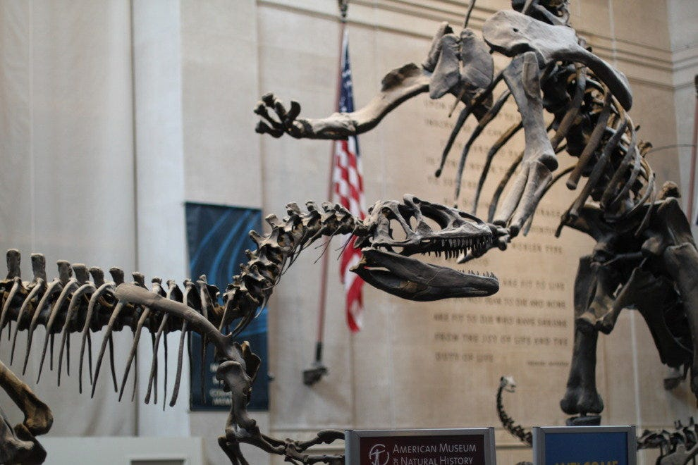 The Best Museum For Dinosaur Enthusiasts