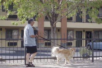 阿尔伯克基10家宠物友好型酒店为您的爱犬提供额外服务。