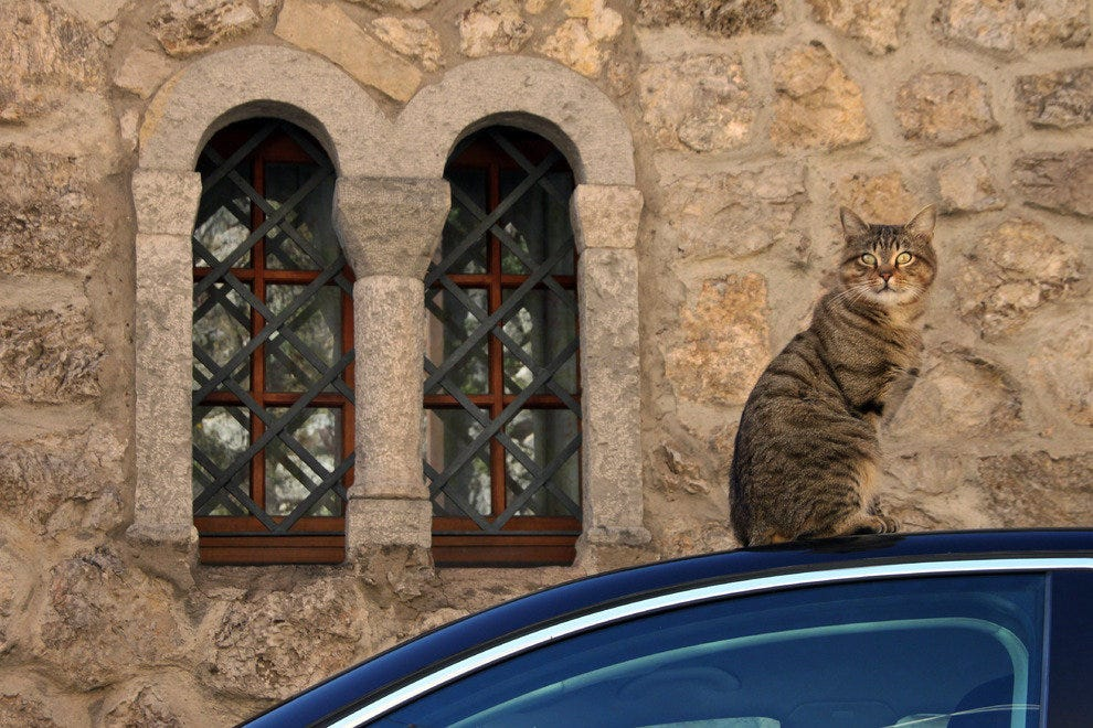 Cat on a car roof, Amalfi Italy