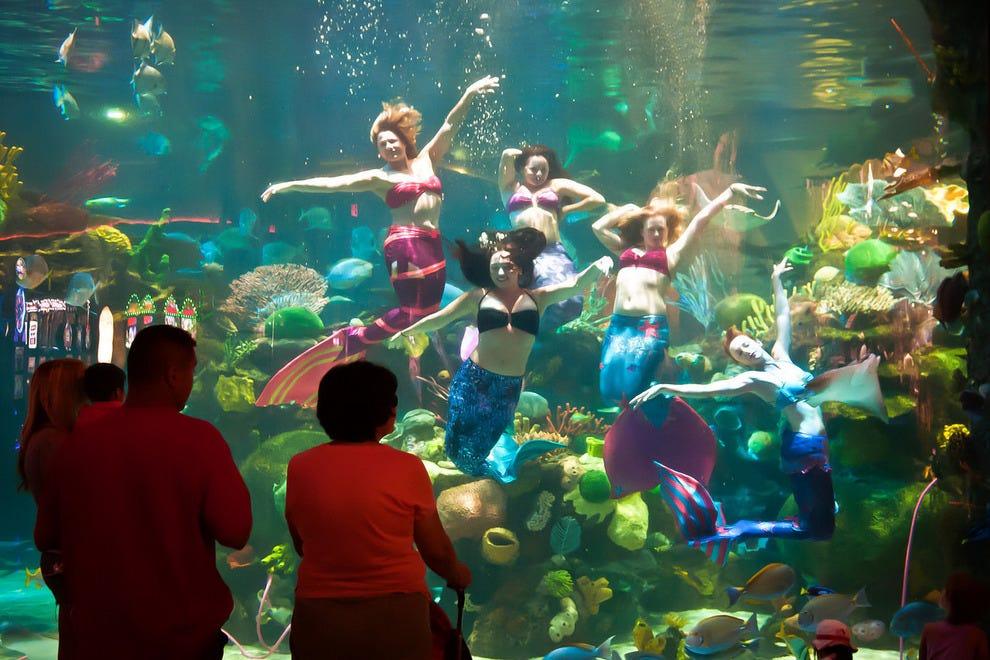 The aquarium inside the silverton las vegas attractions for Fish store las vegas