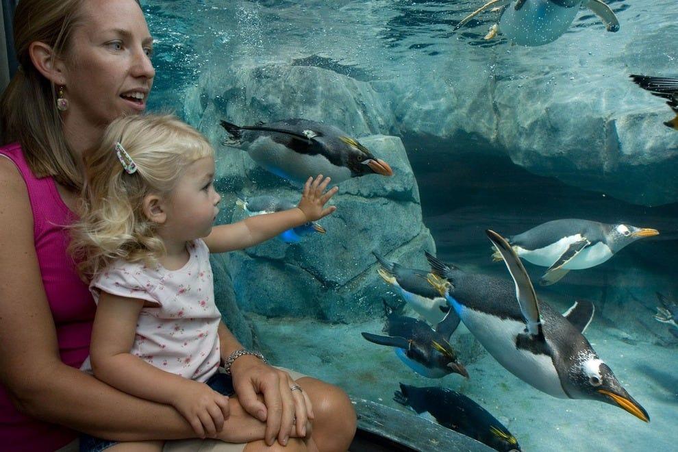 of tennessee aquarium tennessee aquarium tennessee aquarium tennessee ...