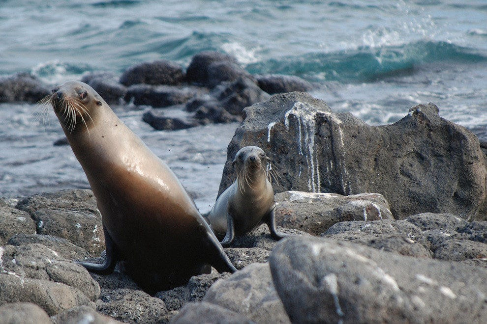 Sea Lions on North Seymour Island