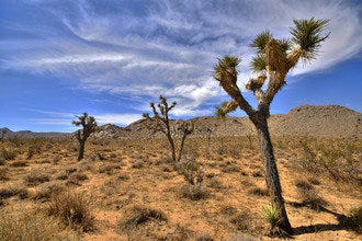 10Best Day Trip:  Explore Joshua Tree National Park